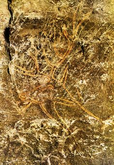 graffiti in the cave of Lascaux, Dordogne (France)