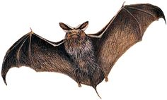Bats.  They are gross and creepy and carry rabies.  When the bats come out, I go in.