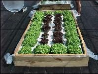 Building a Floating Hydroponic Garden - University of Florida IFAS Extension