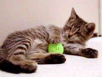Blind Kitten Plays with his Toys for the First Time - the Video the Whole Internet Fell in Love With ♥
