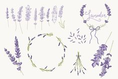 line drawing lavender - Google Search