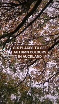 A complete roundup of all the best places in Auckland to see autumn colours and get beautiful photos of the trees in red, yellow and orange. Autumn in New Zealand is such a beautiful time of year! Have I missed any locations in Auckland where you love to see autumn coloured trees? Autumn In New Zealand, Stuff To Do, Things To Do, New Zealand Travel Guide, Auckland New Zealand, Autumn Colours, Orange, Yellow, Places To See