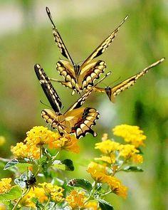 Fly away butterflies ☺♥☼
