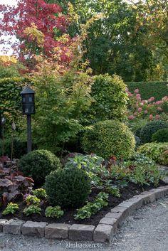 Landscape Design, Garden Design, House Yard, Front Yard Landscaping, Native Plants, Garden Paths, Garden Inspiration, Outdoor Gardens, Perennials