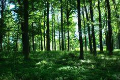 Wald im ehemaligen Zonenrandgebiet bei Mustin/Schleswig-Holstein