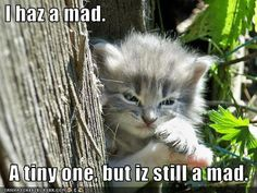 I haz a mad a tiny one but iz still a mad