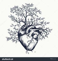 https://www.shutterstock.com/fr/pic-424227829/stock-vector-anatomical-human-heart-from-which-the-tree-grows-heart-tattoo-art-vector-illustration.html?src=1VeVPET54mt3K1VTGn-Gcg-1-11