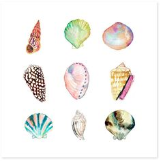 Shell Collection Print
