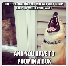 A little potty humor! ;)  It's all fun and games 'til someone steps in it! lol