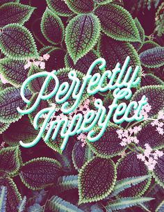 Find the beauty in imperfection (photo credit Isabela Renas) #lettering #plantlife #type
