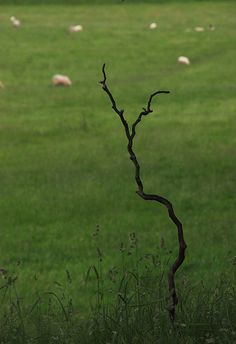 Minimal Treescape by Robert Norbury