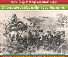 IJUÍ - RS - Memória Virtual: O transporte do trigo no Ijuhy de antigamente...!
