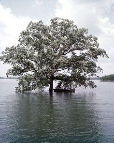 Flashback How Rolling Acres Of Land Became Lake Lanier Metro Atlanta S Largest Source Of Drinking Water Lake Georgia History Lake Lanier Georgia