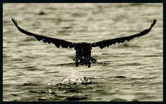 Wings of Fun!
