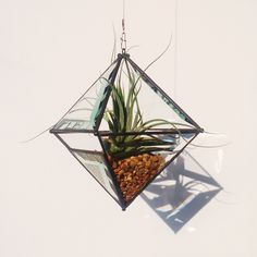 Large Pyramid Beveled Glass Orb Air Plant Planter with Bevel Accent. by OriskanyGlass on Etsy https://www.etsy.com/listing/183948622/large-pyramid-beveled-glass-orb-air