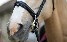 Choosing the right bit: would a hanging cheek snaffle suit my horse?