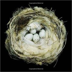 Nests: Fifty Nests and the Birds That Built Them: Amazon.de: Sharon Beals: Fremdsprachige Bücher