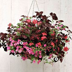 Create Stunning Hanging Baskets by Trying Several Shades of One Color!