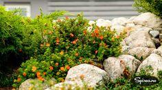 Rød buskmure, med fiberduk og stein som gjør at plantefeltene ikke gror ned med ugress.