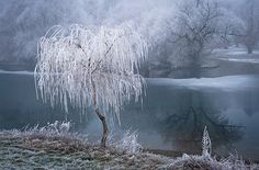 One Frosty Morning