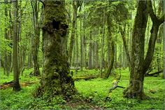 Białowieża Forest in Poland again...I can't get enough of it!!!