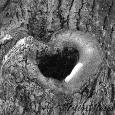 Heart Art, Photography, Heart Artwork, Black and White, Heart Photograph, Tree Photograph, Romantic Print, Wedding Day, Love, Valentines Day