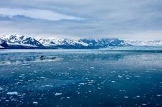 """Climate scientist drops the F-bomb after startling Arctic discovery: The study concerns the large deposits of methane (CH4) — a greenhouse gas over twenty times more potent than CO2 — known to be buried beneath the Arctic. Researchers found that methane is leaking & making it to the ocean's surface.  Here's the deal:  """"Even if a small fraction of the Arctic carbon were released to the atmosphere, we're fucked,"""""""
