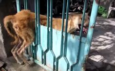 Kind Rescuers Save Frightened Homeless Dog Who Was Stuck in a Gate (VIDEO)
