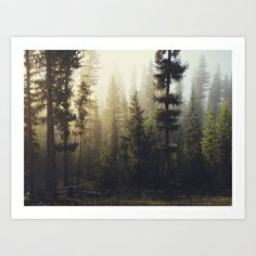 Sunrise Forest Art Print by Kevin Russ - $16.00