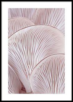 Pink Oyster Pattern Two Poster in de groep Posters / Afmetingen / bij Desenio AB (3653)