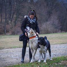 Alabai, central asian shepherd, ovcharka, Cao, my dogs and I