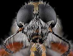 Foto Blogger. Donald Jusa es un joven fotógrafo y geólogo indonesio, que se dedica a la fotografía macro de insectos. A tan sólo 3 centímetros de distancia, sus fotos ofrecen un gran detalle de los insectos, además de mostrar su colorido y rareza.