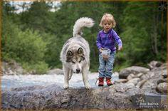 www.dogwalktrail.com hond vakantie Zell Am See, Husky, Dogs, Animals, Animales, Animaux, Pet Dogs, Doggies, Animal