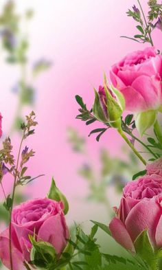 Most Beautiful Pink Flowers with Pictures Love Rose, My Flower, Pretty Flowers, Pink Flowers, Red Roses, Pretty In Pink, Color Rosa, Beautiful Roses, Beautiful Scenery