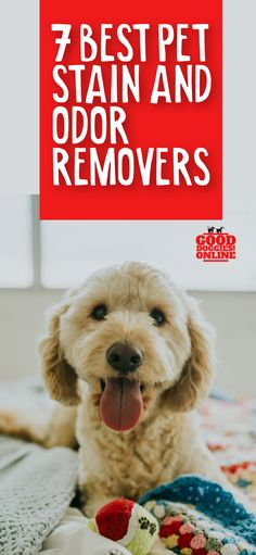 If you struggle with pet odor and pet stains, whether it's from dog urine, cats or other animals, you need a powerful stain and odor remover. Check out our picks for the best pet stain and odor removers. #dogs #pets #petstains #dogurine #cleaning