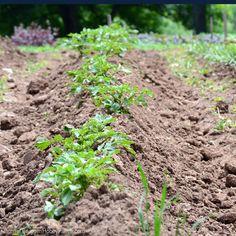 7 Steps to Building Healthier Soil (HobbyFarms.com)