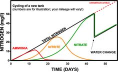 When starting a new tank, the most important thing is for you to know all about the aquarium nitrogen cycle or the aquarium cycle for short. Big Aquarium, Saltwater Aquarium, Fish Tank Sizes, Fish Benefits, Nitrogen Cycle, Aquarium Lighting, New Tank, Aquatic Plants, Health Problems