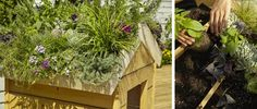 DIY - Votre chien sera au frais l'été sous son toit végétal et votre jardin gagnera en beauté.
