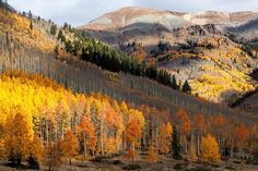 Dusted with Gold Photo by Jim Garrison — National Geographic Your Shot