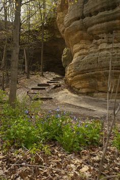 Starved Rock State Park - Just west on I-80.  Great drive, good food, amazing view.  Can't believe it's so close to home.