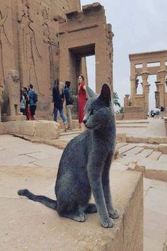 Cats In Ancient Egypt, Egypt Cat, Egyptian Cats, Pet Dogs, Pets, Cute Animals, Lion Sculpture, Explore, Wanderlust