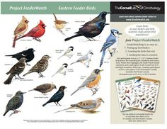 Project FeederWatch is a winter-long survey of birds that visit feeders at backyards, nature centers, community areas, and other locales in North America. FeederWatchers periodically count the birds they see at their feeders from November through early April. Project FeederWatch is operated by the Cornell Lab of Ornithology and Bird Studies Canada.