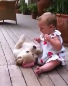 Watch how happy this 2-month-old Golden Retriever puppy is to see his 8-month-old visitor!