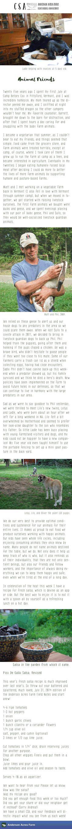 #CSA Note July 30th: Animal Friends #Food #Ag #OrganicFarm #Connecticut #Kent #Organics #FarmFresh #FarmToPlate #Animals #Goats #YearRoundFarms #AgBlog #Recipes #FarmLife #KnowFarmsKnowFoods #Farmers #CTFarms