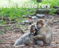 Daun Wildlife Park- Daun, Germany. 34 mins from Spang, 1 hour 34 mins from Ram.