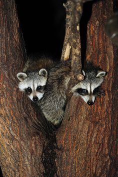Tight Squeeze by Brian E Kushner, via Flickr