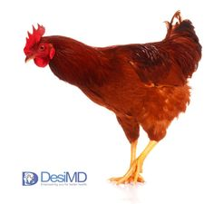 Foodborne Bacteria May Cause Disease in Some Poultry Breeds
