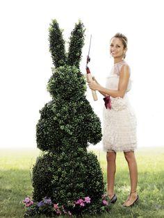 hop bunny hop