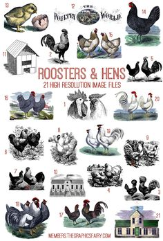 Roosters and Hens Image Kit - TGF Premium! - The Graphics Fairy