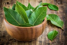 Amazing bay leaf benefits abound in healing oils and teas. Bay is a 'salt buster' herb. Add bay for flavoring, use less salt. Best Herbs To Grow, Growing Herbs, Bay Leaf Benefits, Indian Bay Leaf, Wasp Repellent, Fresh Bay Leaves, Sage Plant, Types Of Herbs, Laurel Leaves